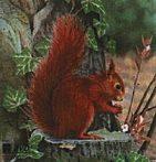 Lőlap, mókus